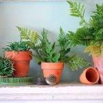 Plantas fazendo milagres na decoração