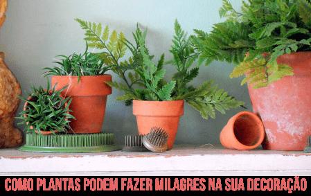 simplichique plantas decoração 2a