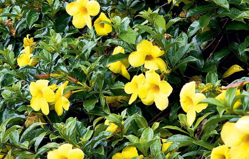 plantas com flores fáceis de cuidar  Simplichique