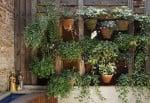 Jardins verticais: leve o verde para dentro de casa