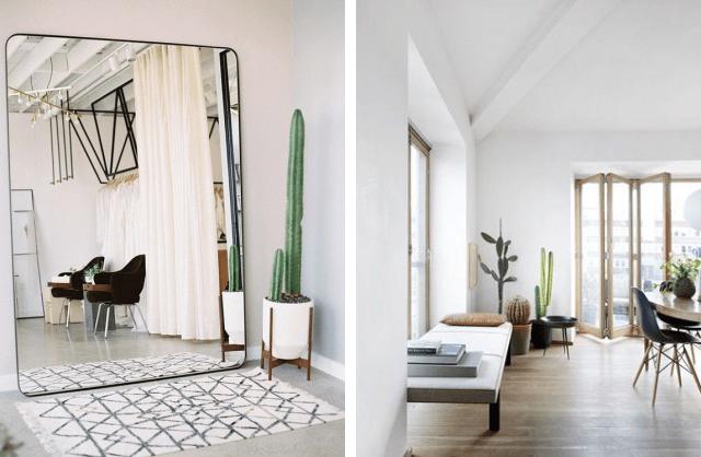 cactus na decoração 2021