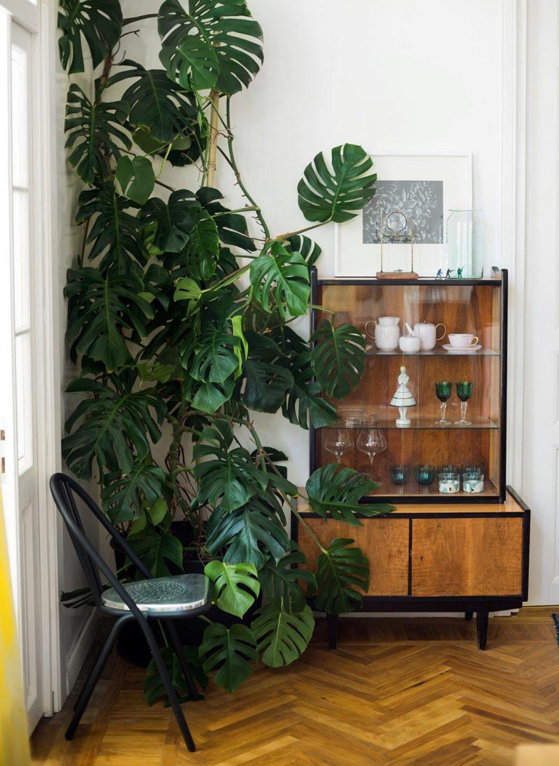 Costela de ad o design natural para decorar a casa simplichique - Plantas de interior tropicales ...