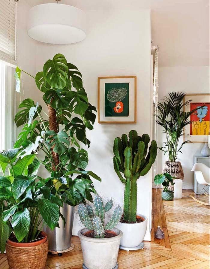 plantas para decorar sua casa   costela de ad o