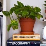 Plantas para decorar: Jiboia, uma das melhores para ter em casa