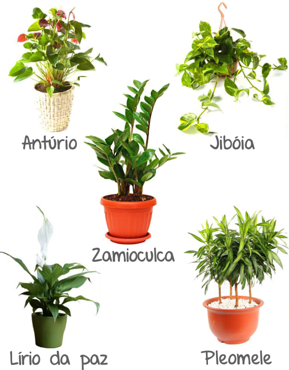 plantas na decoração 07