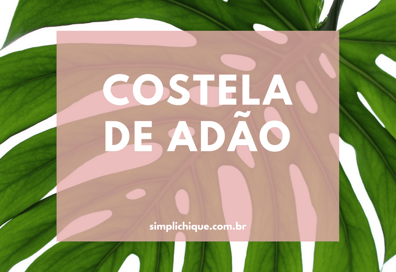 Costela de Adão: design natural para decorar a casa