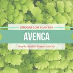 Plantas para decorar: Avenca, uma plantinha linda e delicada