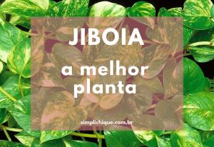 Jiboia, uma das melhores plantas para ter em casa