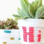 4 DIYs para suas plantinhas ficarem mais lindas