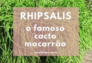 Rhipsalis: a planta ideal para jardins verticais